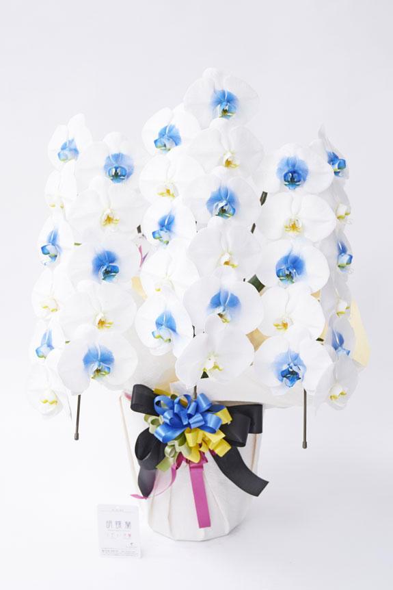 <p>スタンダードな白の大輪胡蝶蘭と、中心部分を青色に特殊加工したカラー胡蝶蘭のコンビネーションが見事な胡蝶蘭です。</p>