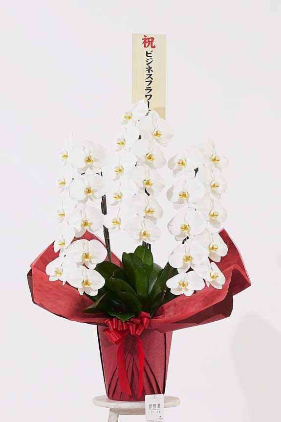 <p>パールホワイトラメ装飾胡蝶蘭にも立札(またはメッセージカード)を無料でお付けする事が可能です。</p>