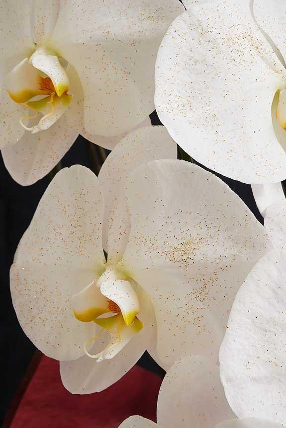 <p>大振りなコチョウランの花の上に散りばめられたゴールドラメが高級感を演出します。</p>