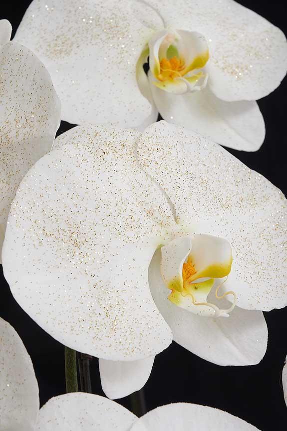 <p>ゴールドに輝くラメを散りばめた胡蝶蘭は、多くのお花が並ぶお祝い事のシーンでも目をひく一品でしょう。</p>