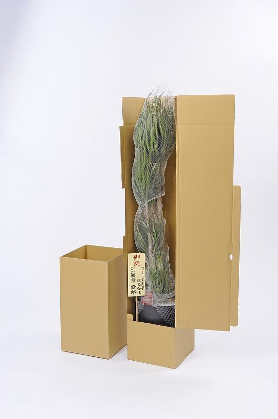 <p>3D立体メッセージ札[Open(吹き出し型)]付 観葉植物 パキラ 10号※バスケット鉢カバー付は、しっかり梱包で安心のお届け。</p>