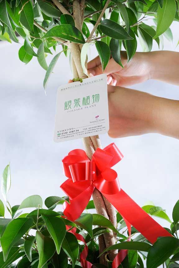 <p>3D立体メッセージ札[Open(吹き出し型)]付 観葉植物 パキラ 10号※バスケット鉢カバー付には、ビジネスフラワー®安心の品質保証タグが付いています。</p>