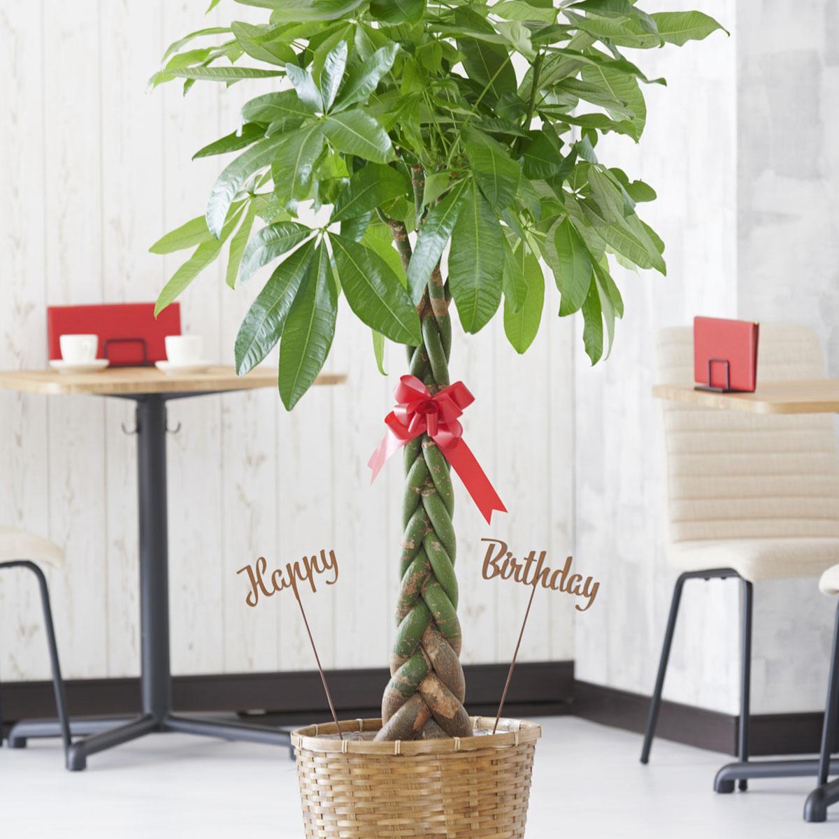 <p>観葉植物に3D立体メッセージ札[Happy Birthday(文字型)]を付けたイメージ</p>
