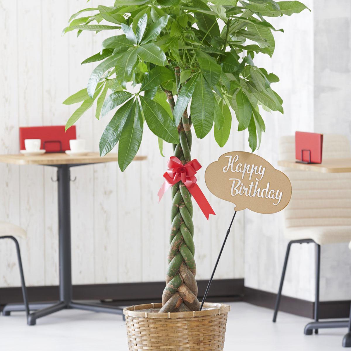 <p>観葉植物に3D立体メッセージ札[Happy Birthday(吹き出し型)]を付けたイメージ</p>