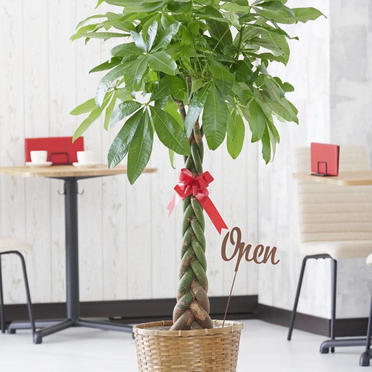 <p>観葉植物に3D立体メッセージ札[Open(文字型)]を付けたイメージ</p>