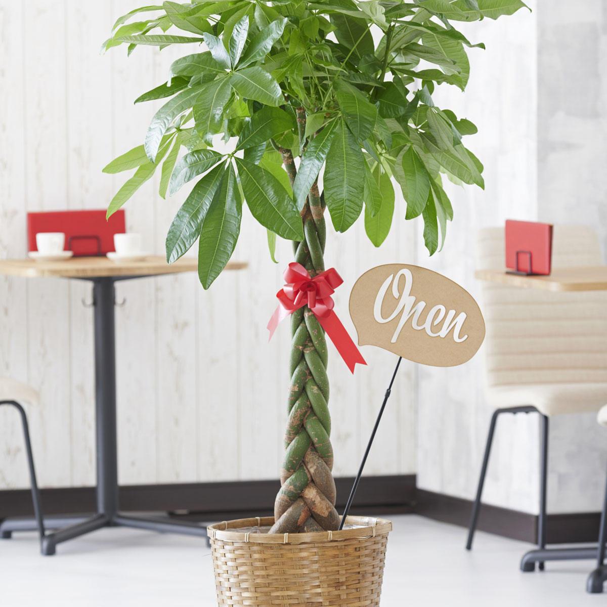<p>観葉植物に3D立体メッセージ札[Open(吹き出し型)]を付けたイメージ</p>