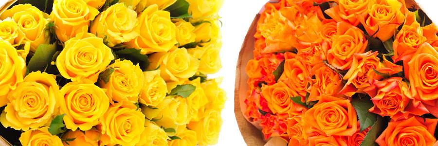 オレンジ・黄色系