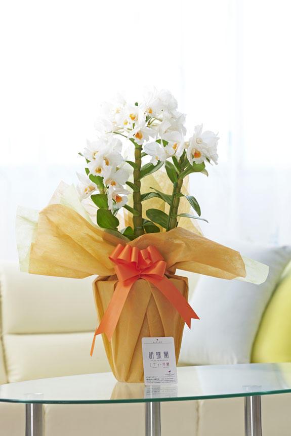 <p>一般的にデンドロビュームというと冬の定番(12~3月頃)の洋蘭というイメージですが、フォーミディブルという品種はもう少し暖かな時期に流通する品種となります。</p>