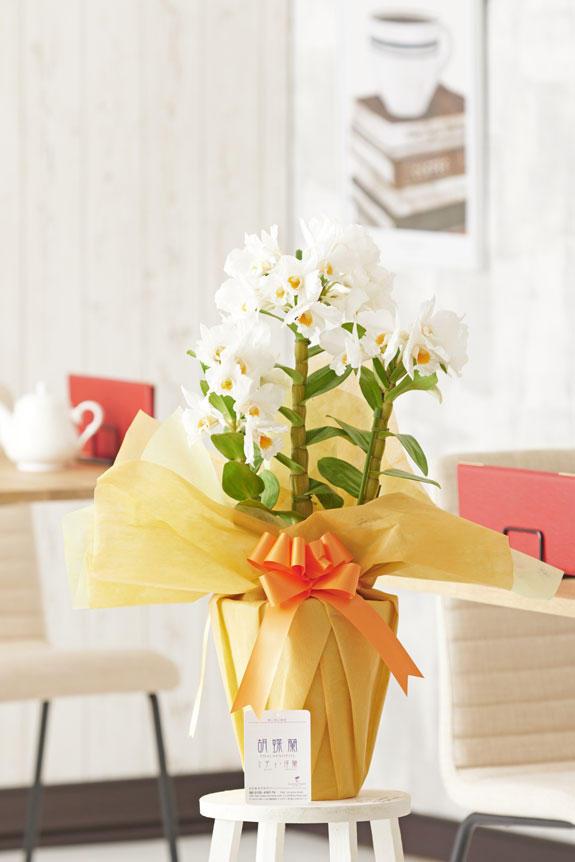 <p>カトレアのような大ぶりで立派な白いお花は、適切な管理さえできれば花持ちが良いという特徴があります。</p>