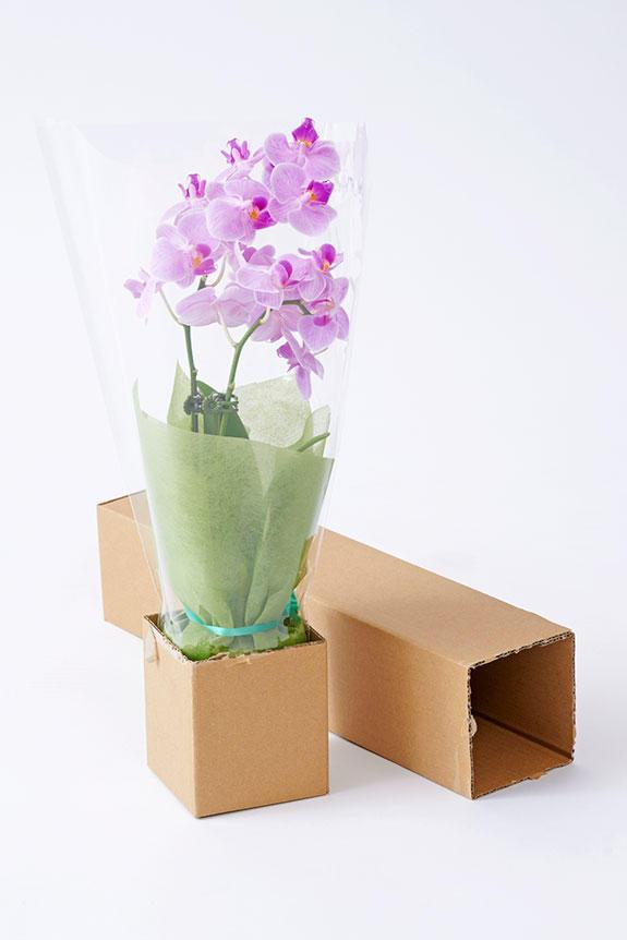<p>胡蝶蘭は厳重梱包の宅配でお届けしております。ご安心ください。</p>