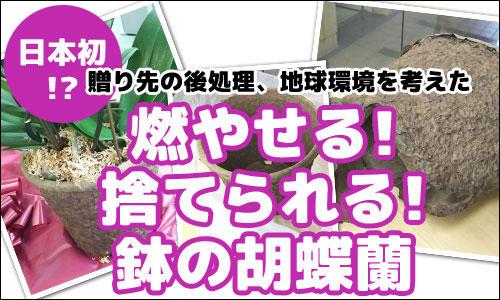 ecohachi_bn.jpg